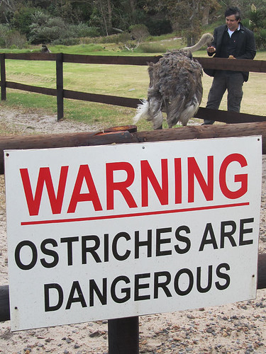 Ostriches are dangerous