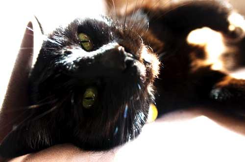 Toto, enjoying the sun
