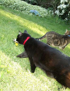 Toto has a goldfinch; Satchel is jealous