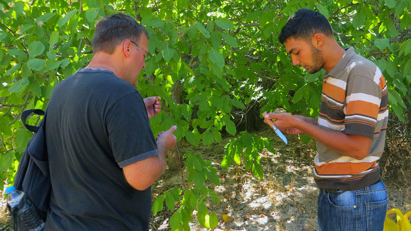 Sharing walnuts with Hussein