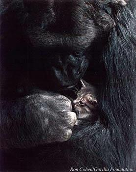 [Koko cradles the kitten, All Ball]