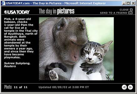 [A baboon checks a cat for fleas]