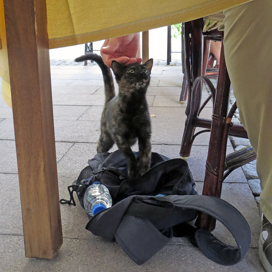 Nick sneaks food to a cat in Selcuk