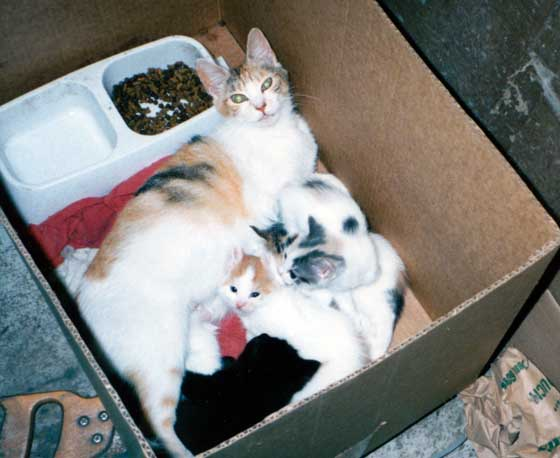 Toto and her cat family