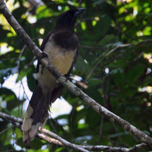 unidentified bird at Tikal
