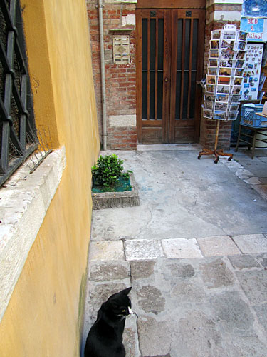 One of only two cats we saw in Venice